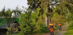 Borkenkäfer befallenen Bäume